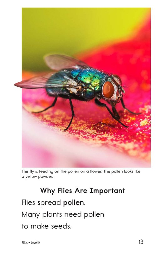 Book Preview For Flies Page 13