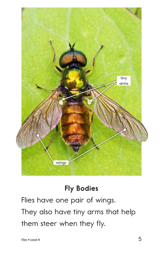 Book Preview For Flies Page 5