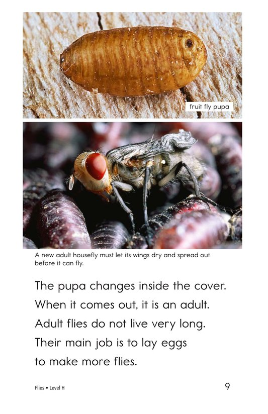 Book Preview For Flies Page 9