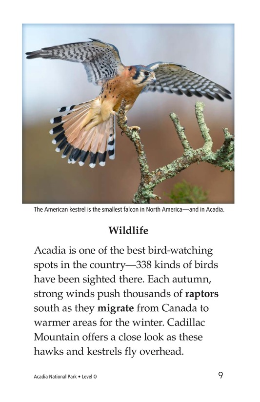 Book Preview For Acadia National Park Page 9
