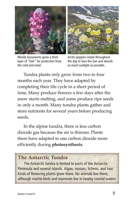 Book Preview For Tundra Page 11