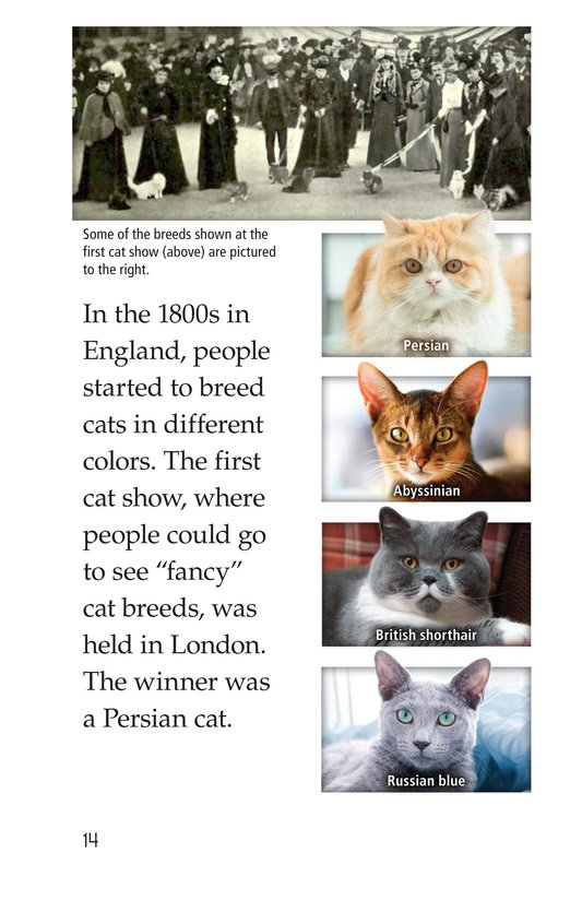 Book Preview For The History of House Cats Page 14