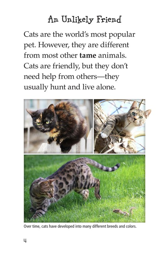 Book Preview For The History of House Cats Page 4
