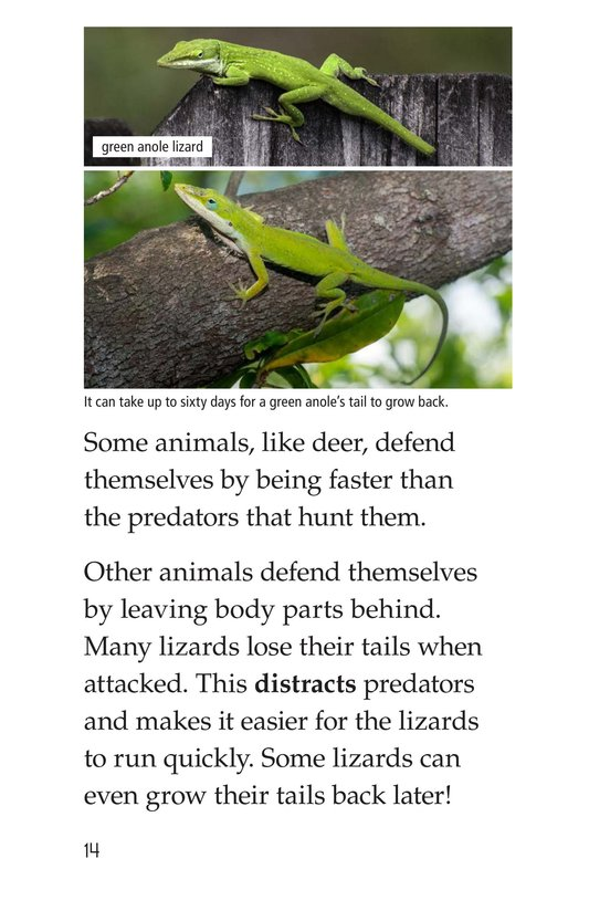 Book Preview For Animal Defenses Page 14