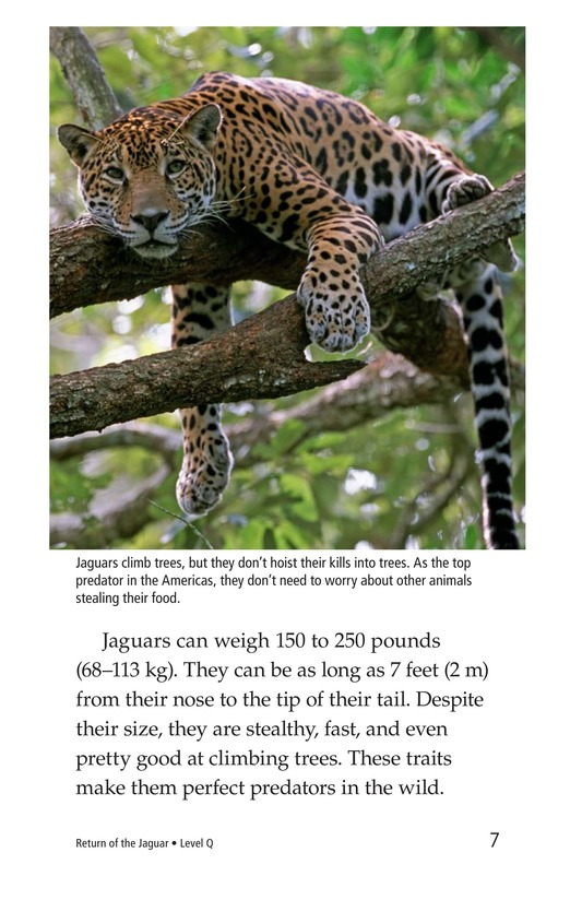 Book Preview For Return of the Jaguar Page 7