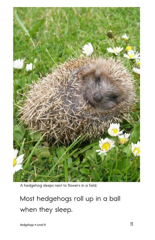 Book Preview For Hedgehogs Page 11