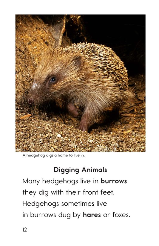Book Preview For Hedgehogs Page 12