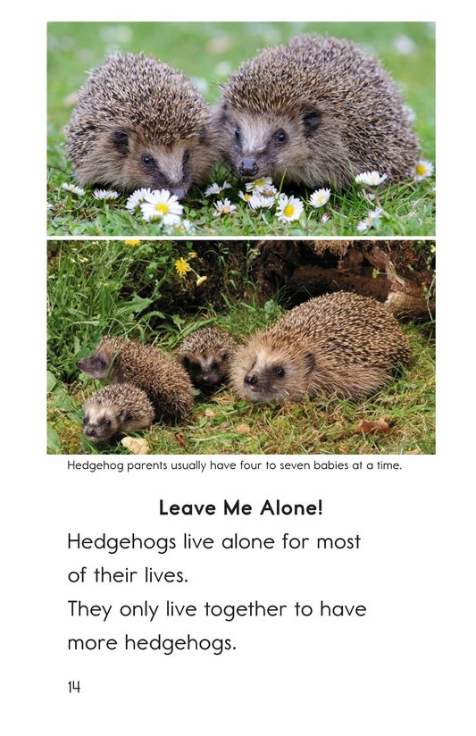 Book Preview For Hedgehogs Page 14