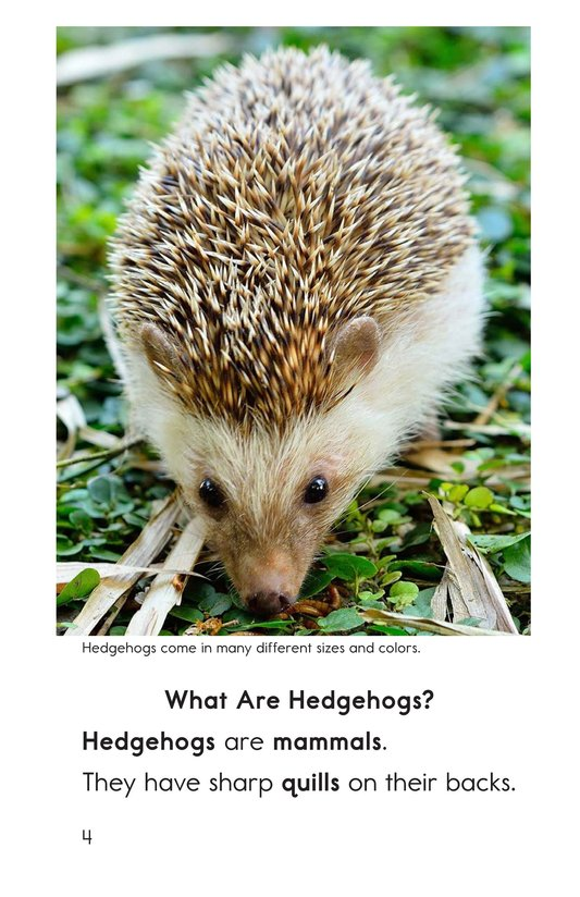 Book Preview For Hedgehogs Page 4
