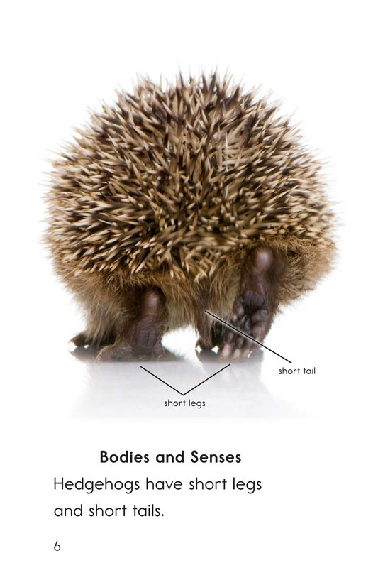 Book Preview For Hedgehogs Page 6