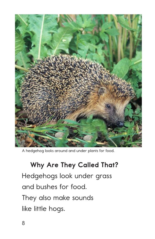 Book Preview For Hedgehogs Page 8