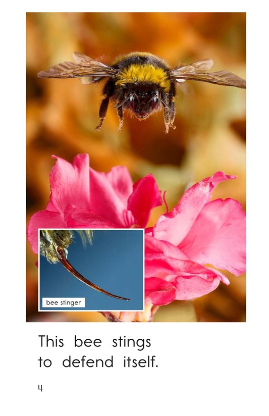 Book Preview For Animals That Sting Page 4