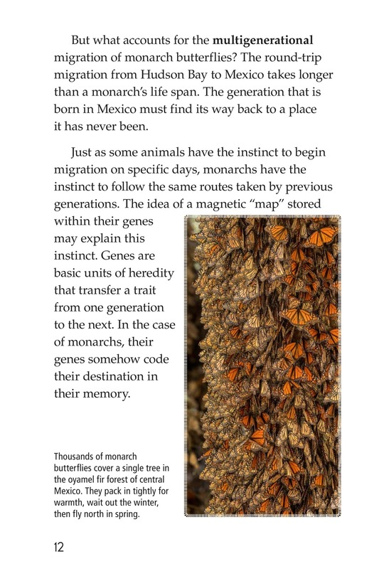Book Preview For Amazing Migrations Page 12