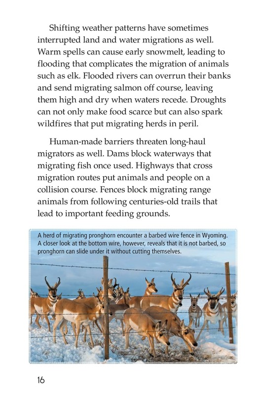 Book Preview For Amazing Migrations Page 16