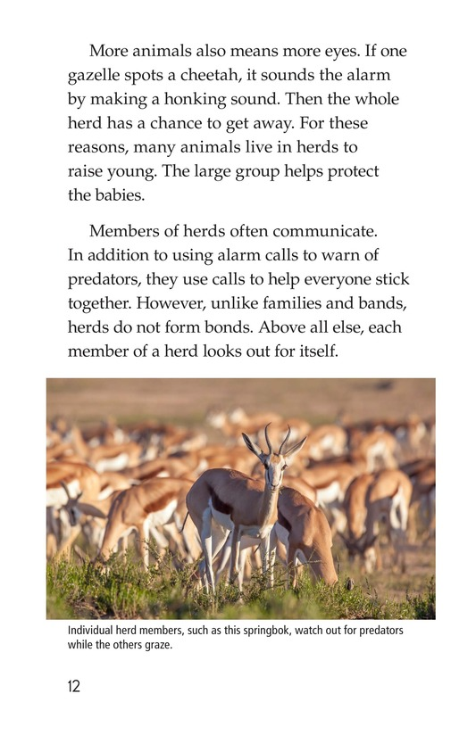 Book Preview For Animal Groups: Strength in Numbers Page 12