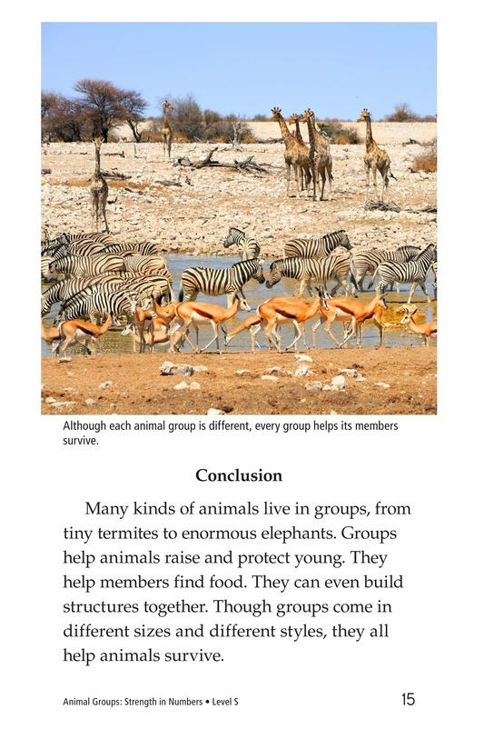 Book Preview For Animal Groups: Strength in Numbers Page 15
