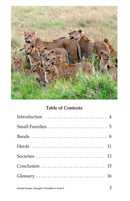 Book Preview For Animal Groups: Strength in Numbers Page 3