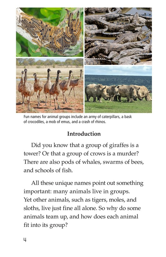 Book Preview For Animal Groups: Strength in Numbers Page 4
