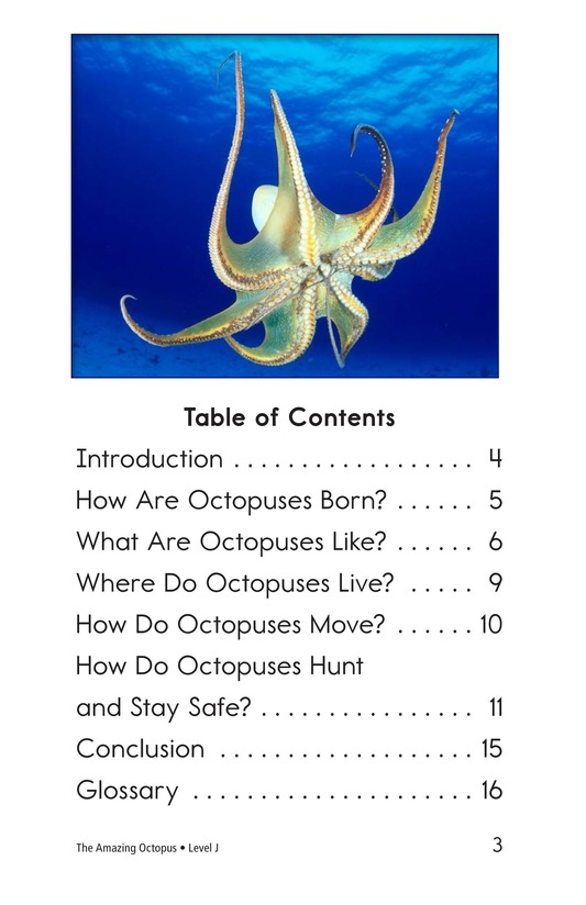 Book Preview For The Amazing Octopus Page 3