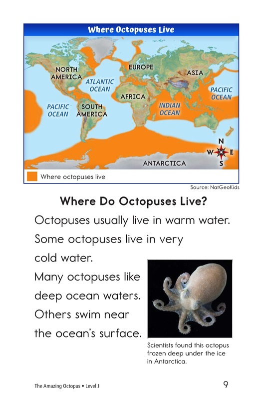 Book Preview For The Amazing Octopus Page 9