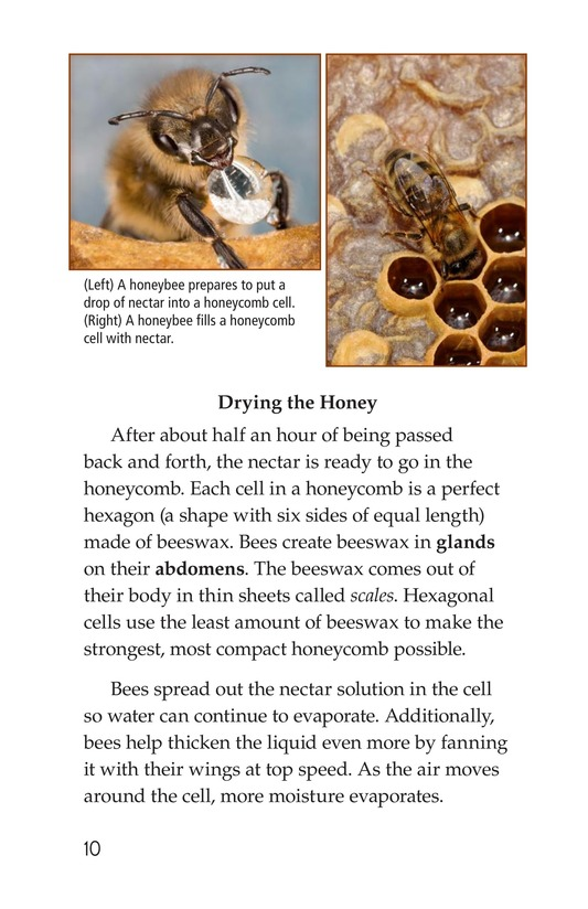 Book Preview For How Bees Make Honey Page 10