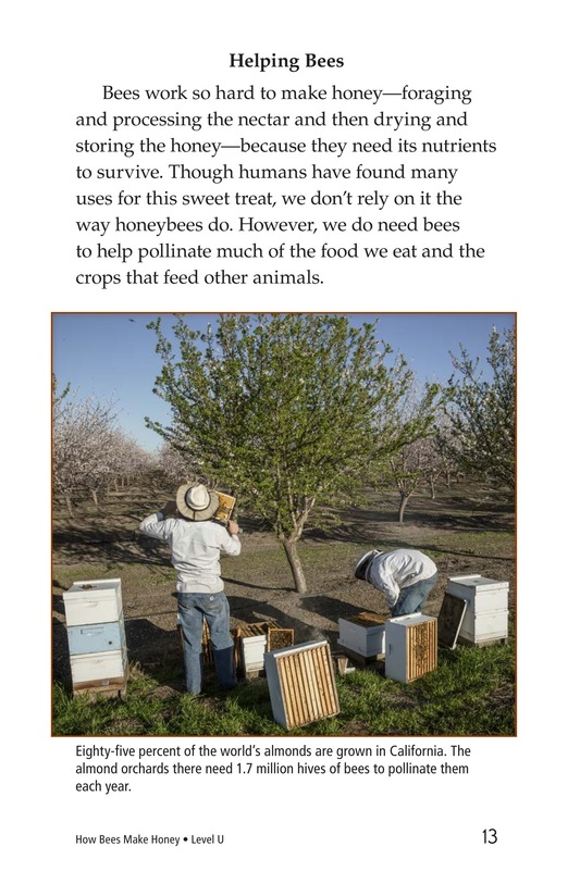 Book Preview For How Bees Make Honey Page 13