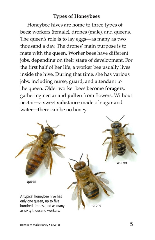 Book Preview For How Bees Make Honey Page 5