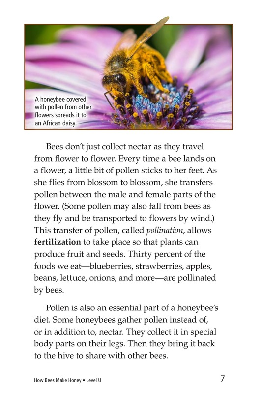 Book Preview For How Bees Make Honey Page 7