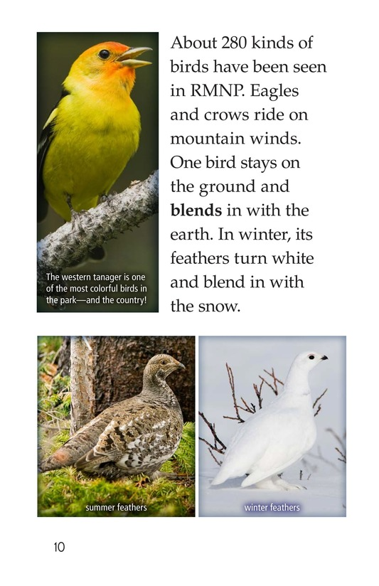 Book Preview For Rocky Mountain National Park Page 10