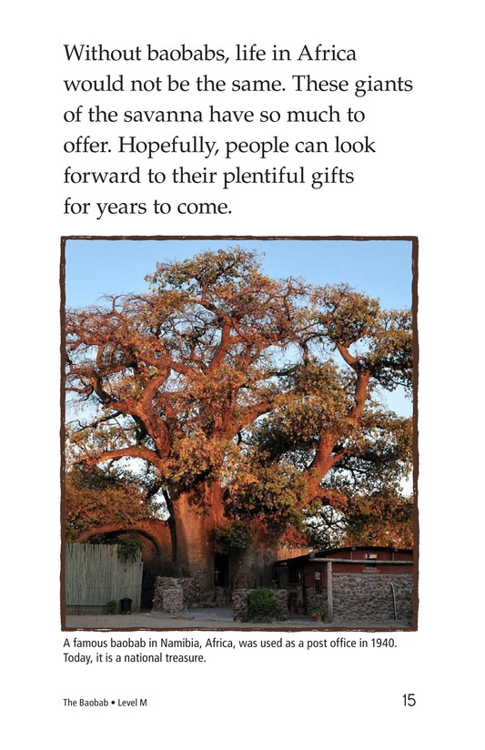 Book Preview For The Baobab Page 15