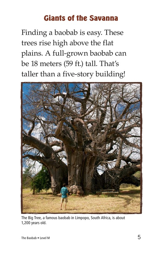 Book Preview For The Baobab Page 5