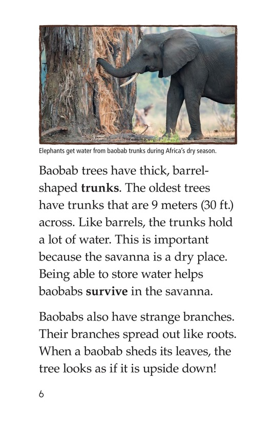 Book Preview For The Baobab Page 6