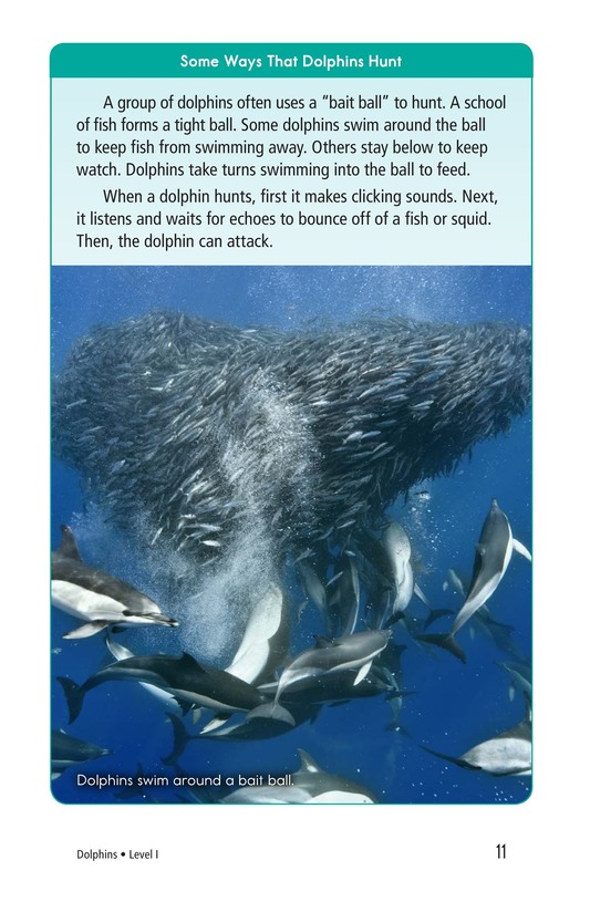 Book Preview For Dolphins Page 11