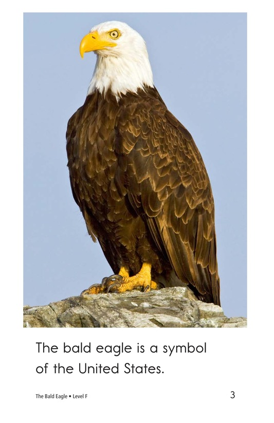 Book Preview For The Bald Eagle Page 3