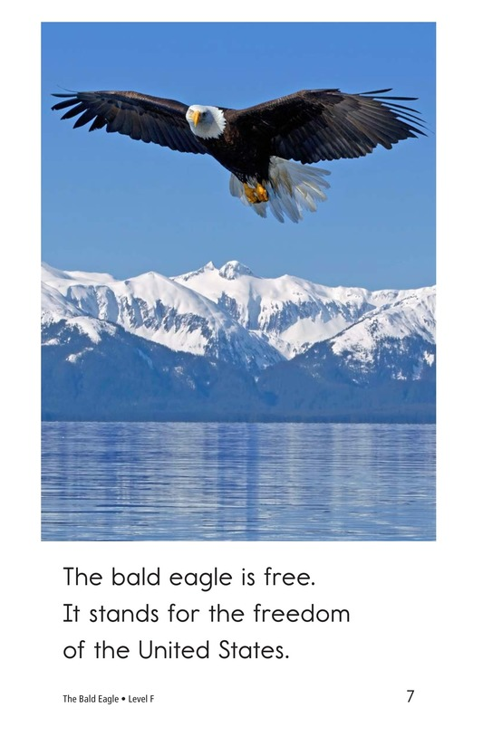 Book Preview For The Bald Eagle Page 7