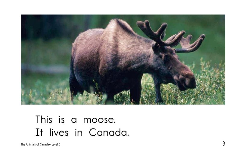 Book Preview For The Animals of Canada Page 3