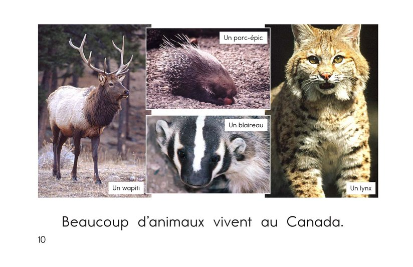 Book Preview For The Animals of Canada Page 10