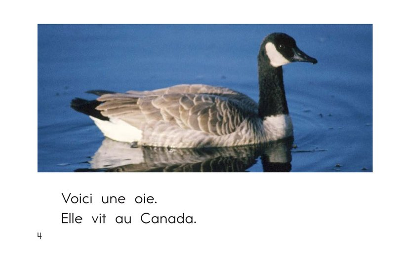 Book Preview For The Animals of Canada Page 4