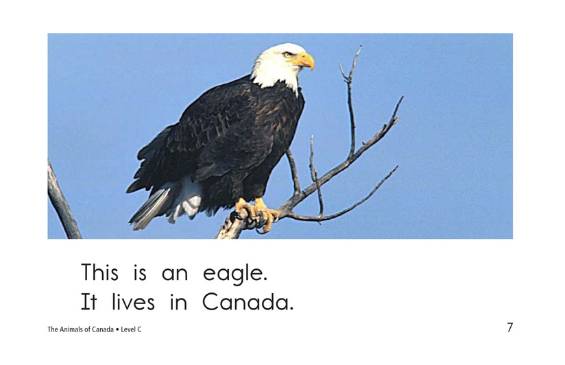 Book Preview For The Animals of Canada Page 7
