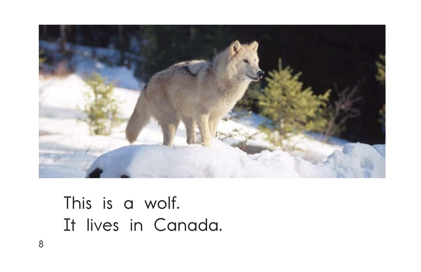 Book Preview For The Animals of Canada Page 8
