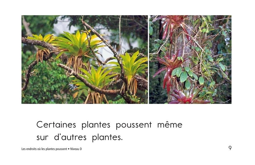 Book Preview For Where Plants Grow Page 9