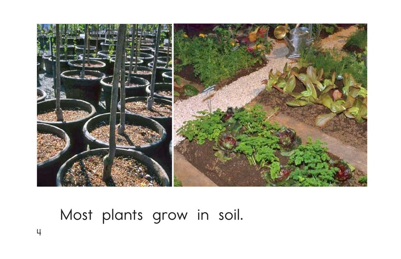 Book Preview For Where Plants Grow Page 4