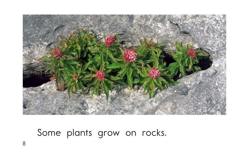 Book Preview For Where Plants Grow Page 8