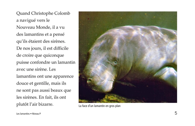 Book Preview For Manatees Page 5