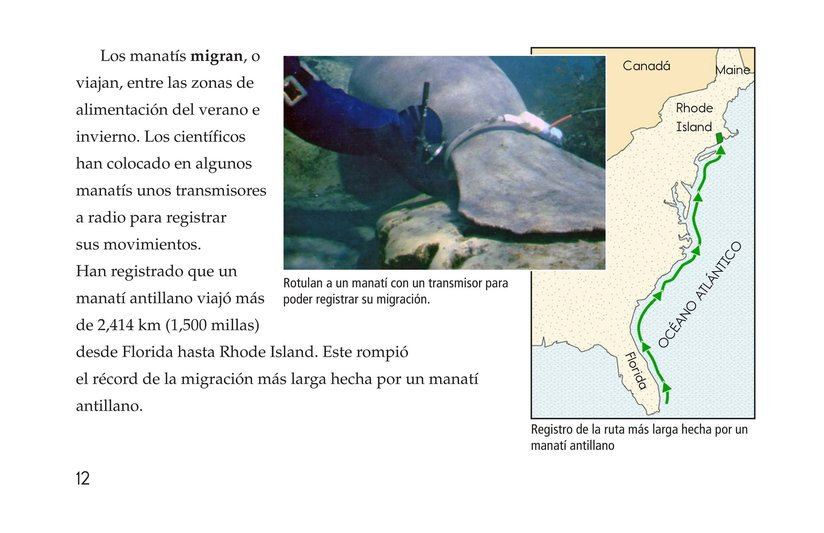 Book Preview For Manatees Page 12