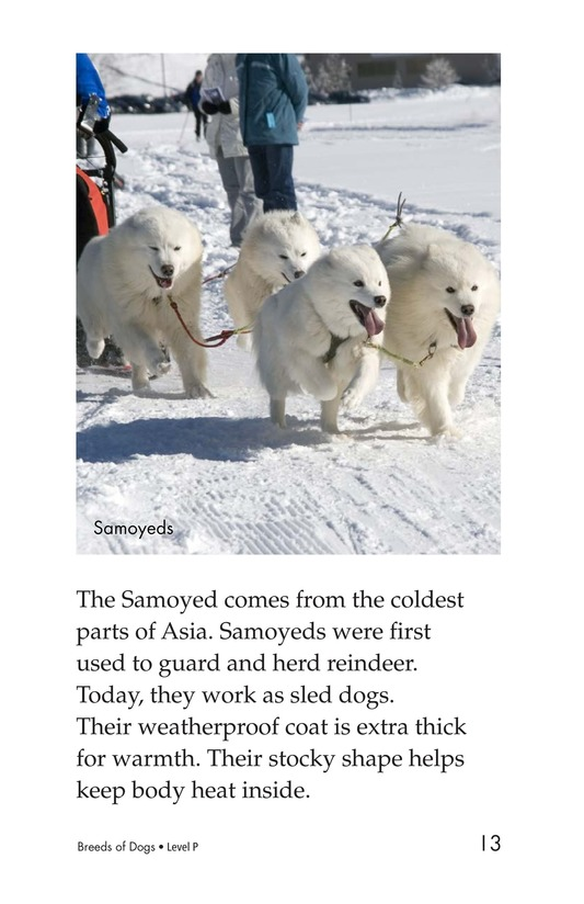Book Preview For Breeds of Dogs Page 13