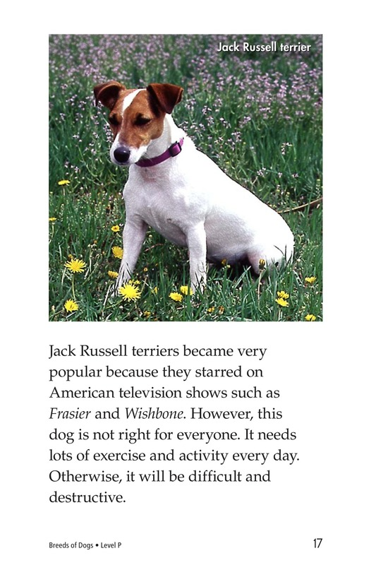 Book Preview For Breeds of Dogs Page 17