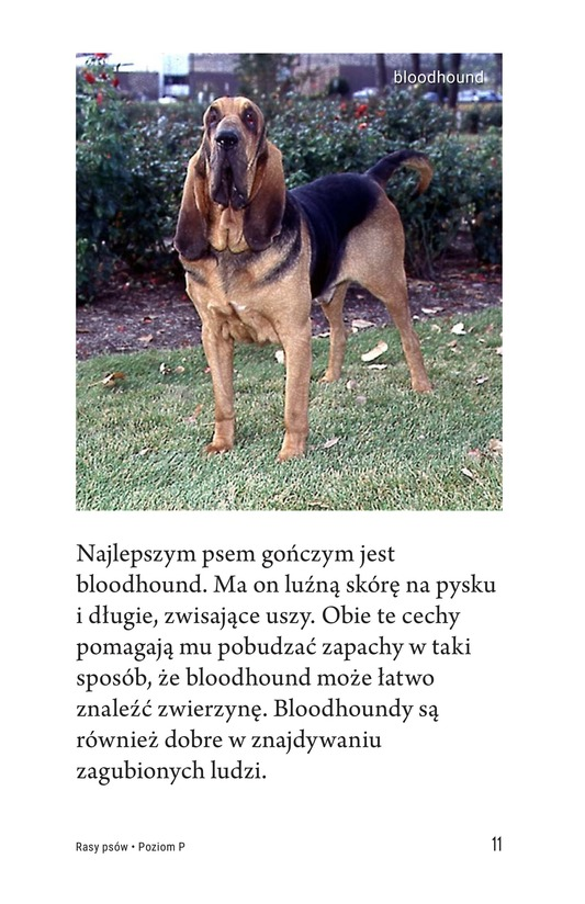 Book Preview For Breeds of Dogs Page 11