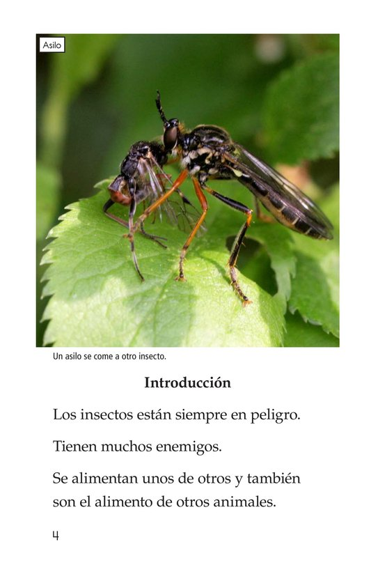 Book Preview For Extreme Insects Page 4