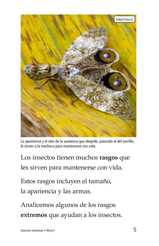 Book Preview For Extreme Insects Page 5
